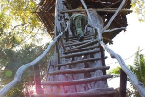 zambia kasanka treetop viewpoint
