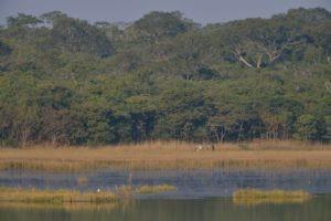 zambia kasanka walking safari