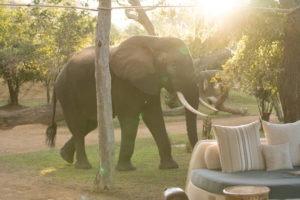 zambia lower zambezi chongwe elephant camp