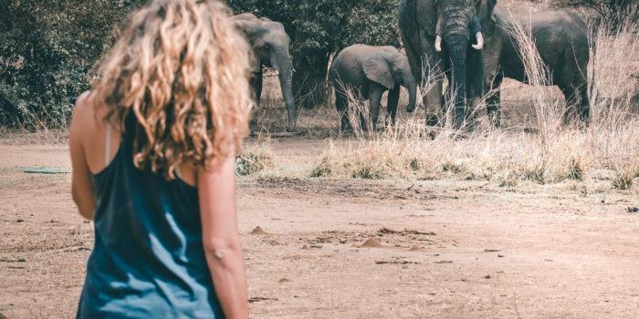 zambia lower zambezi gesa safari