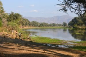 zambia lower zambezi sausage tree camp walking safari landscape