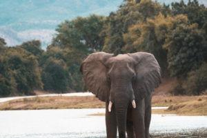 zambia lower zambezi wilflide safari