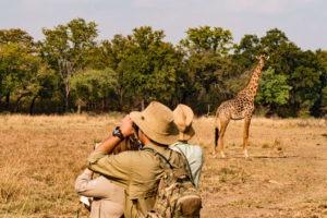 zambia luangwa valley walking safari frank tour