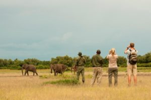 zambia south luangwa walking safari game viewing