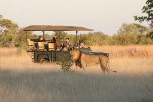 zimbabwe hwange lion game drive safari big five