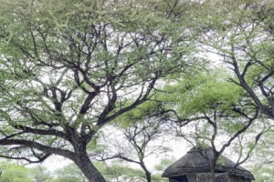 Onguma Tree Top 0522