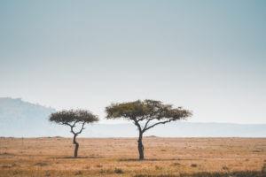 tanzania safaris acacia
