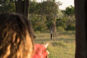 Blog Serengeti1