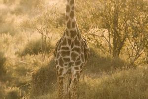 Blog Serengeti13