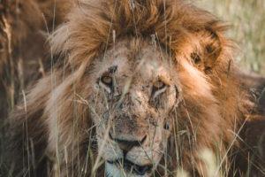 Blog Serengeti2