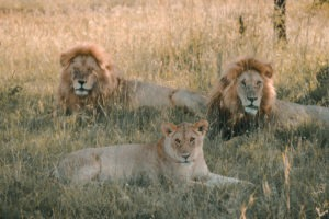 Blog Serengeti3