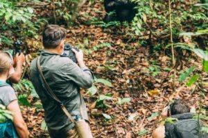 greystoke mahale guests chimps