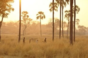 ikuka camp ruaha sunset walking