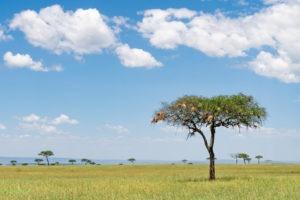 lamai serengeti landscape 1
