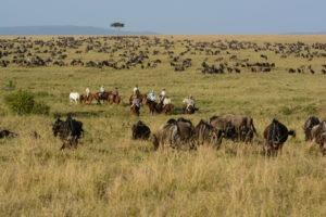 21 Miles of wildebeest