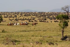 5 Wildebeest migration