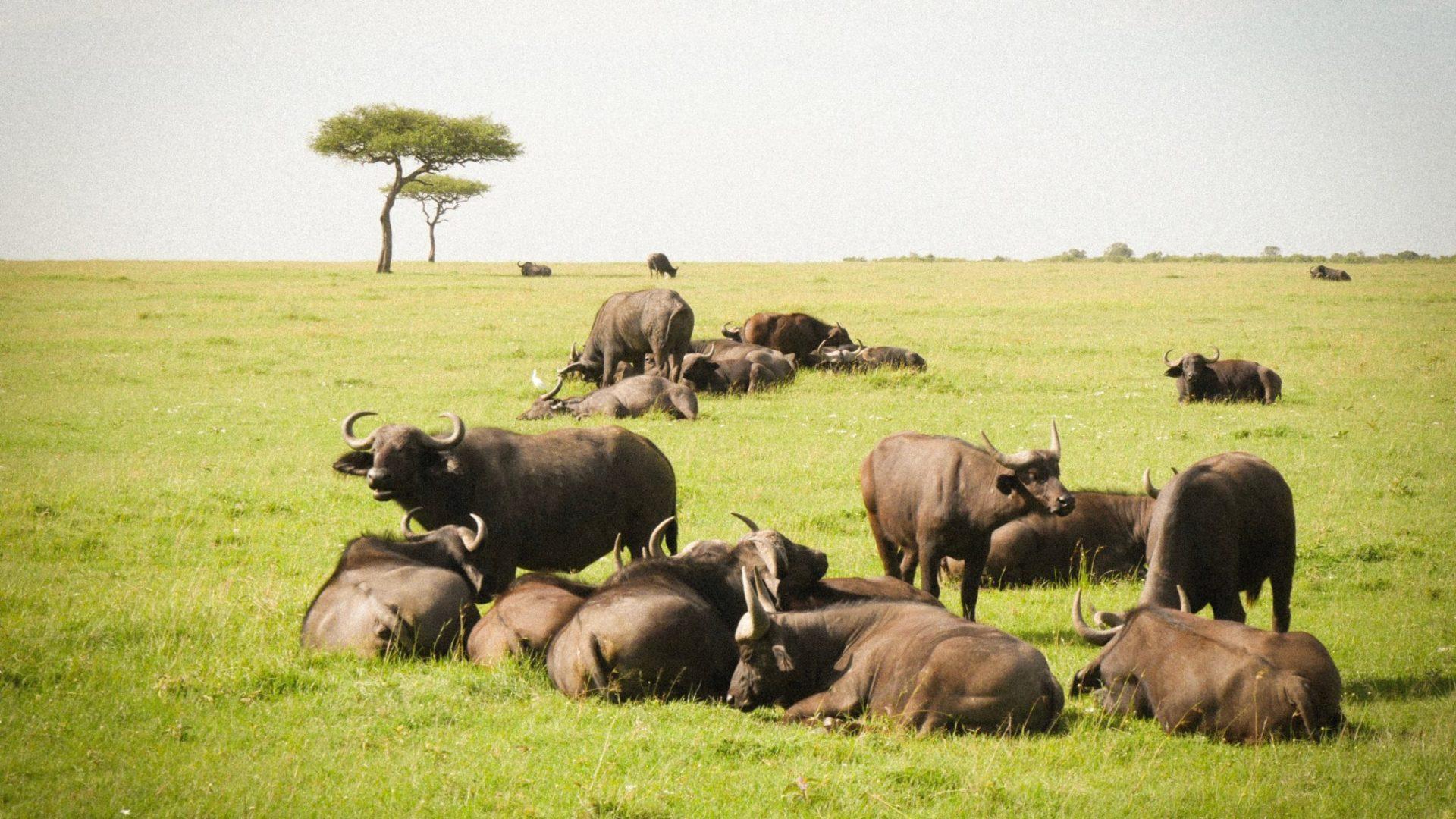 Masai Mara Kenya13