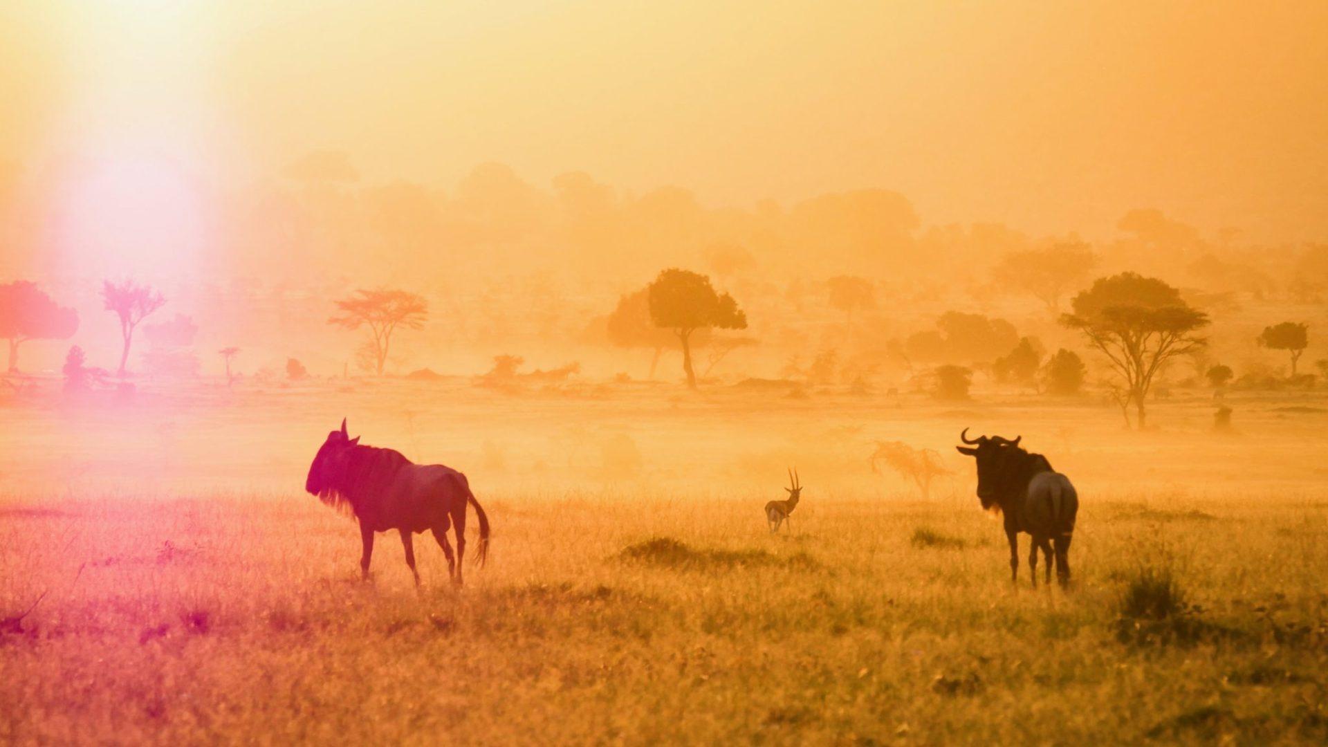 Masai Mara Kenya17