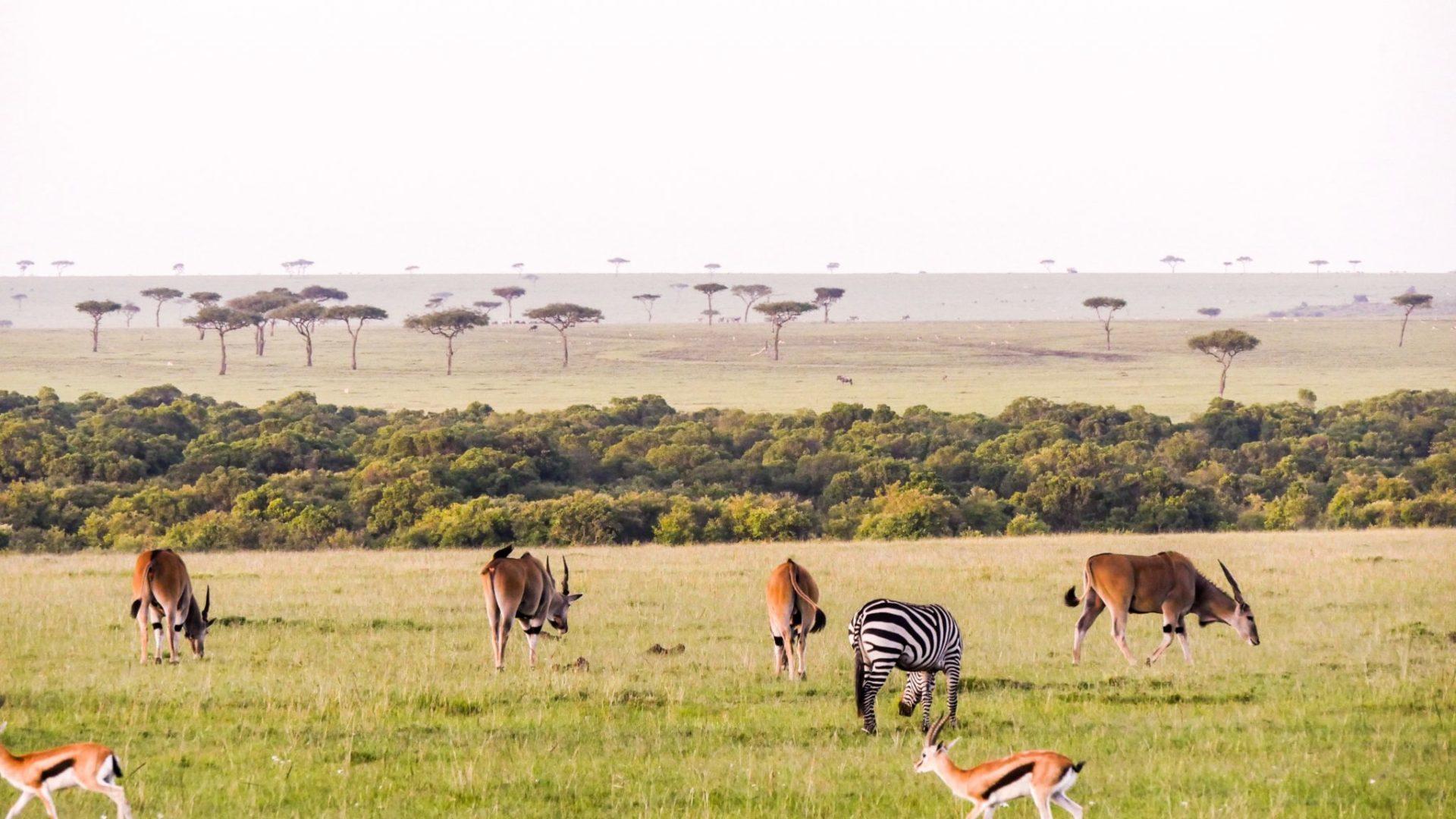 Masai Mara Kenya9
