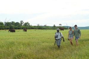 bumi hills safari lodge elephants wa