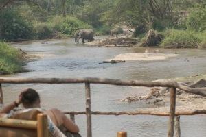 ishasha wilderness camp uganda elephants