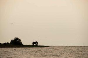kyambura gorge lodge uganda elephant