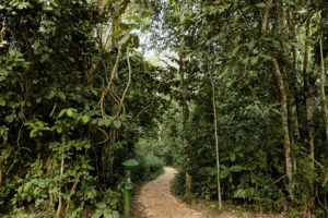 primate lodge kibale pathway