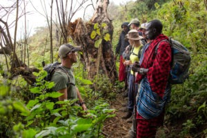 rift valley trekking tanzania forest