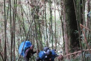 rwenzori trekking uganda bamboo 1