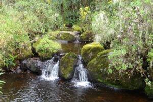 rwenzori trekking uganda scenery 1