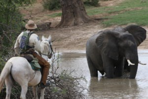 Ride Zimbabwe 2