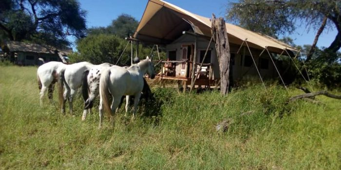 Ride Zimbabwe Accommodation