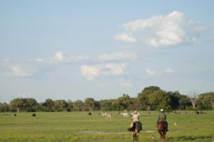 Ride Zimbabwe plains