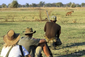 Surefoot Safaris Walking with Hyena Will Whitford